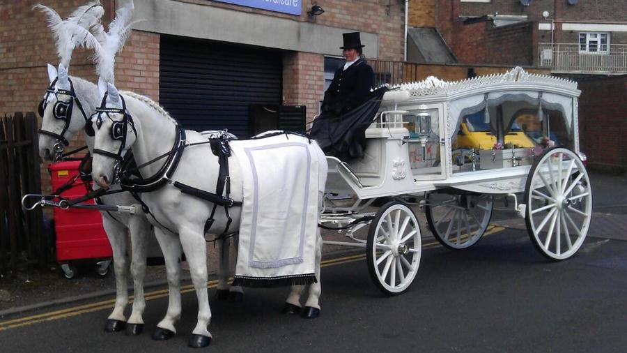 White Horse Drawn Hearse Horse Drawn Funerals