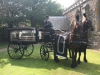 black-horse-drawn-carriage