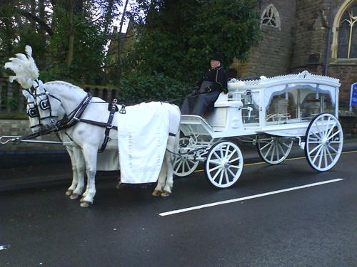 white-horse-drawn-carriage
