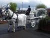 white-hearse-01