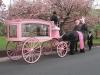 pink_hearse_010